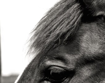 Art Photography: HOPE FOR SHANNON, black and white photography, country photography, country art, farm photography, horse, country decor