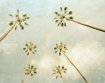 Palm Tree Photography, California Print, Beach Decor, Coastal Decor, Los Angeles Print, teal blue, mint green, pastel, Wall Art, Fine Art