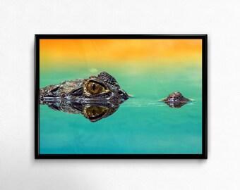 Crocodile Photography Print, Crocodile poster print, Large wall art, Crocodile wall art, Scandinavian design art, Real poster.
