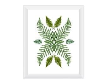 Ferns. 8.5x11. Fine Art Photographic Natural History Print. Minimalist. Natural Home Decor. Indoor garden botanical.