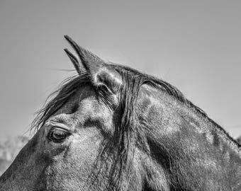 Horse Photography Horse Photo Friesian Horse Print Horse Art, Black and White Photography of a Friesian Horses Western Photo Decor