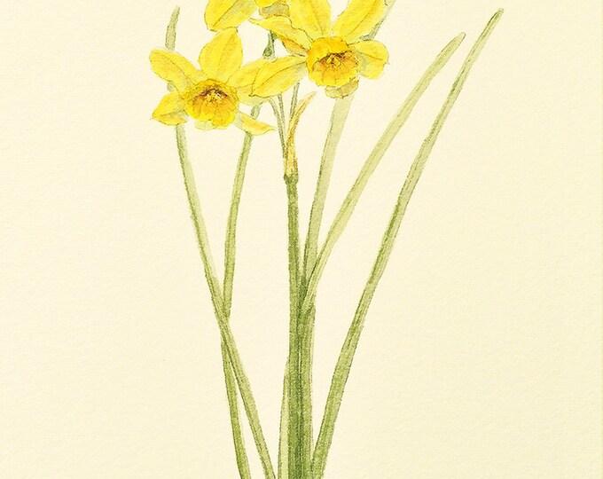 122 Narcissus Multi Flower Card