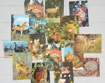 16 Vintage Animal Postcards UNUSED 1950/60s
