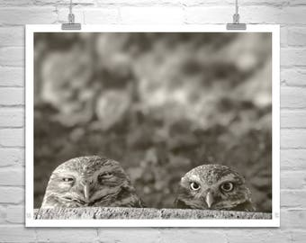 Burrowing Owl Bird Photography, Owl Print, Desert Bird Picture, Arizona Gift, Owl Art, Owl Picture, Desert Owl Photograph, Gift for Birder