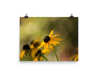 brown eyed susan flowers print | nature photography | wall decor