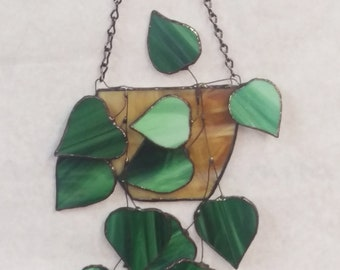 Stained Glass Ivy, Stained Glass plant