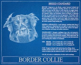 Border Collie Portrait  / Border Collie Art / Border Collie Wall Art / Border Collie Print / Border Collie Gift