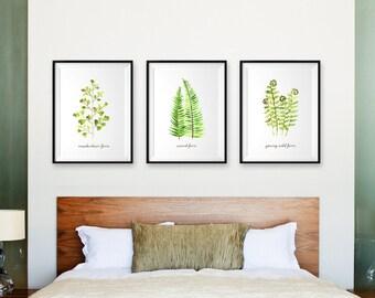 Fern Illustration Fern Art Print Botanical Chart Set of 3 Art Print Botanical Print Leaf Art Spring Decor Living Room Decor Art for Bedroom