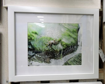 St. Thomas water crab sunning 8x10 framed and ready to hang