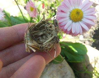 1.18 inches super mini birdnest for fairy garden tree,bird nest,Fairy Garden Bird nest, fairy bird nest,fairy garden accessories