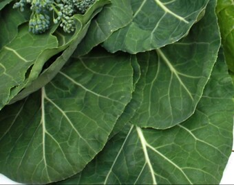 1,000 Collards Seeds- Vates Heirloom