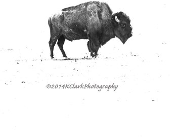 Buffalo Fine Art Photography Black and White minimal Western Home decor prairie country home decor Ranch house chic Bison