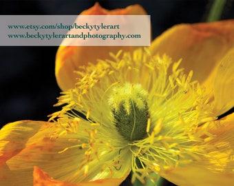 Poppy Flower Fine Art Photo Print