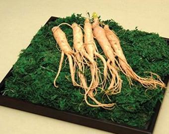 7 Ginseng Root Seeds-1092