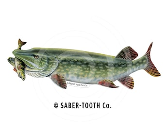 Northern Pike with Perch Fish Decal Sticker