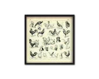 Chicken Breeds Print - Antique Chicken Wall Art - Hen Fowl Wall Art Poster - Chicken Farming - Kitchen Decor