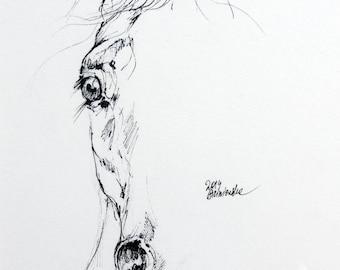 Arabian horse, equine art, horse portrait, equestrian, original pen drawing