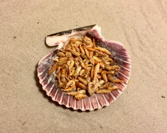 River Shrimp ~ Hermit Crab Food