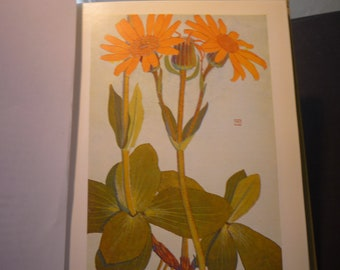 Yellow Silver Alpine Flowers Botanical Print - Flower Lithographs - vibrant colors - double sided - Wolfs Bane Sooty Senecon