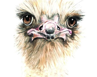 Ostrich Watercolor Print
