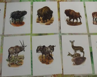 10 old boards poster 19 x 27 cm Buffalo Hippotrague, Cobe faces, Oryx cross, wildebeest