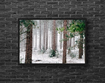 Pine Forest - Winter Forest Photo - Snowy Forest - Forest Landscape Photo - Pines Photo - Forest Print - Forest Wall Art - Forest Wall Decor