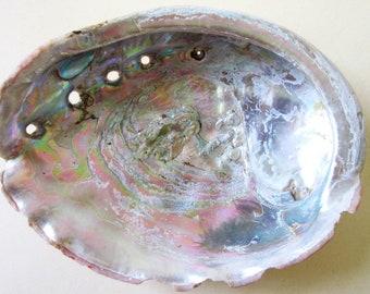 Large Abalone Shell, 7 1/2 inch