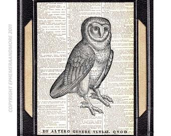 OWL Woodcut Luckas Schan art print medieval bird ornithology black white illustration vintage dictionary book page wall decor 8x10, 5x7
