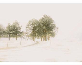 tree photography, landscape photography - 9x12 fine art photo - dreamy winter white woodland snow trees