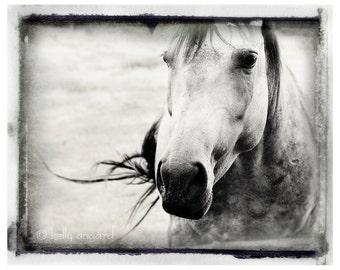 Horse Photography, horse photograph - 8x10 black and white photo, wild spirit horse - animal, nature fine art