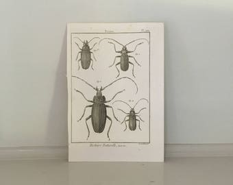 c. 1788 INSECTS BEETLES print original antique insect engraving bug print - plate 202