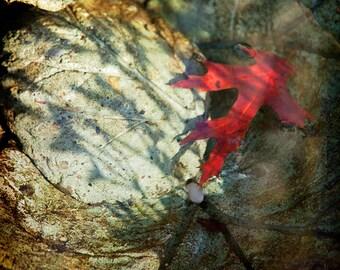 Red Grey Rust Stone Leaf Photograph--Red Leaf Floating--Fine Art
