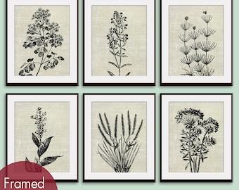 Wild Field Flowers (Series B7) Set of 6 - Art Prints (Featured in Ivory Linen) Botanical Flower Art Prints