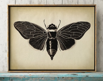 Insects print, Insect poster, moth print, moth poster, butterfly,  insects chart, fly poster, insect wall art, aged sepia black and white