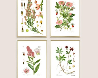 Wall art print decor set of 4 flowers print floral print antique botanical print wild plants print illustration print poster pink green A4