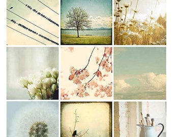 Nature Photograph Set - flowers, blackbirds, dandelions, trees, pastel, neutral, country decor,  photo set