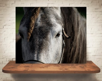 Horse Photograph - Fine Art Print - Color Photography - Equine Wall Art - Wall Decor -  Horse Pictures - Farmhouse Decor - Horses