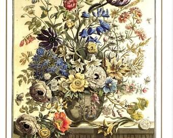 "May Flowers Art Print- 12 MONTHS of FLOWERS -18th Century Botanical Illustration Winterthur Floral Arrangement- Baby Wedding Gift 7.75 x 10"""