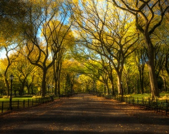 Dreams of Central Park Landscape Photograph New York City Literary Walk The Mall Autumn Elm Trees Color Photograph Green Zen Art Print Fall