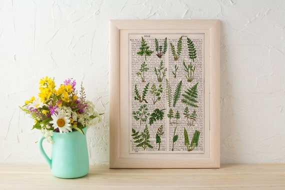 Wild Ferns collection Print on Vintage Dictionary Book page, Wild flora art, Wall art naturalist illustration BFL213
