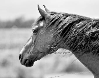 Horse Pictures, Horses, Equine Art, Horse Photo, Black and White Photography, Equines, Easy