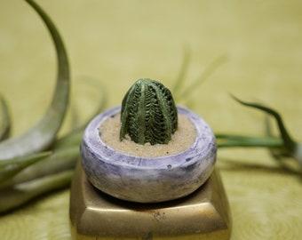 Miniature Succulent - Moonglow Crassula