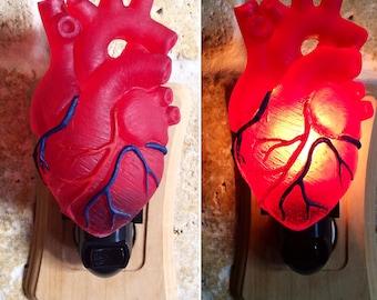Anatomischen Herz Nachtlicht