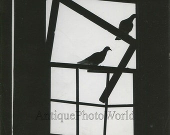 Doves in window silhouette vintage art photo by G. E. Hauver