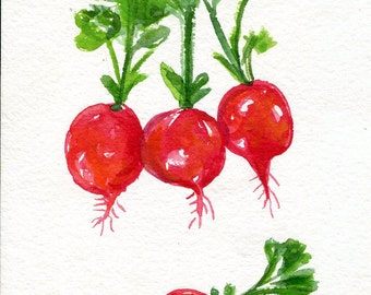 Original Radishes watercolors paintings, Vegetables watercolor, Kitchen Art decor, watercolor of red radishes, 5 x 7, foodie art gift
