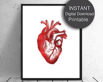 Printable 16x20 Anatomical Heart Print Red Heart Print Human Heart 8x10, A4