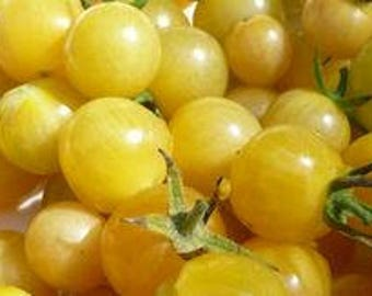 White Currant Tiny Tomato, Heirloom/OP rare 8+ seeds