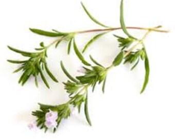 Dried organic Summer Savory - Satureja Hortensis