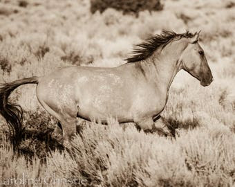 "Horse print,Wild Horse Photo from The Sand Wash Basin in Colorado. Horse Photo. ""Gallop in the Sage"""