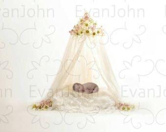 white canopy with newborn digital background